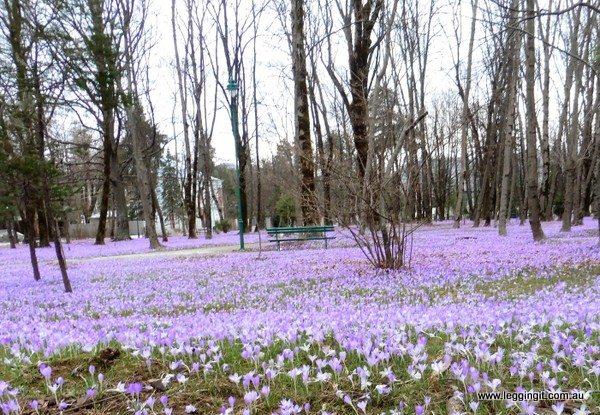 Spring Cetinje