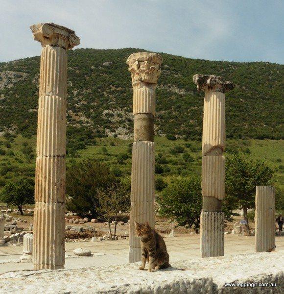 Cat in ruins