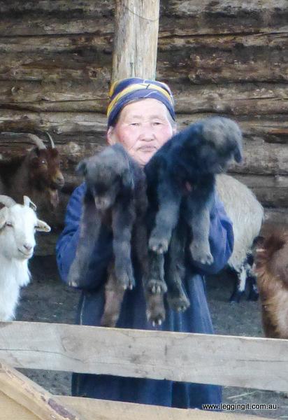 Nomadic Family Goats