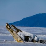 A Day at Lake Baikal