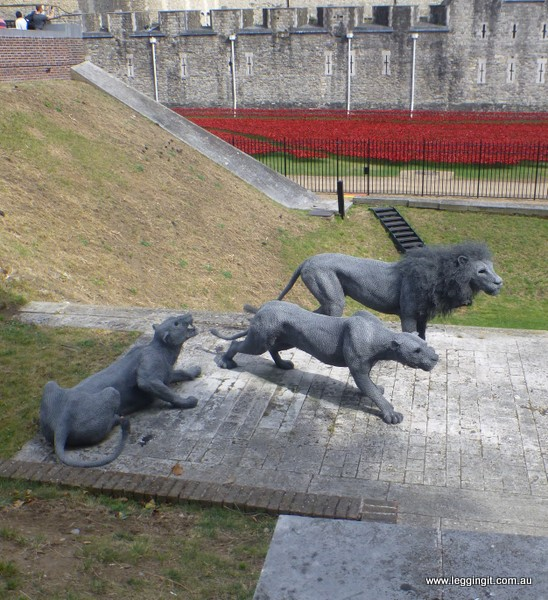 Lions at Tower of London