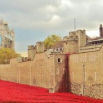 London a City of Poppies, Bears and Buses