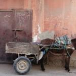 Manic Magical Marrakech