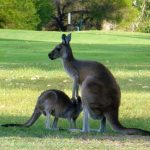 The Best Places to See Australian Animals In Perth By Public Transport