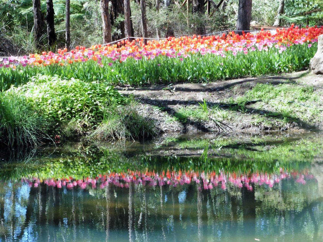 Araluen Botanical Park