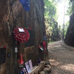 The Thai Burma Death Railway